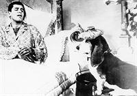 Patient mit Dachschaden – Bild: kabel eins Classics
