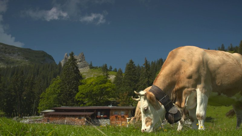Die Mäderalp im Berner Oberland. – Bild: Planet TV