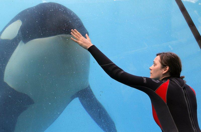 Ste?phanie (Marion Cotillard) beim Training mit ihrem Killerwal. – Bild: WDR/Wild Bunch