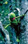 Kermit, der Frosch – ProSieben