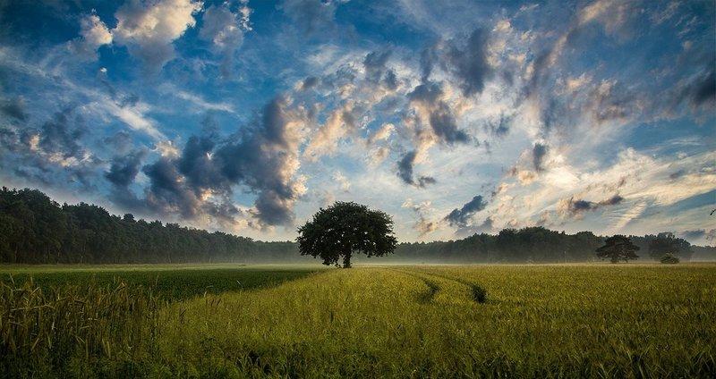 Tree – Bild: CC0 Creative Commons