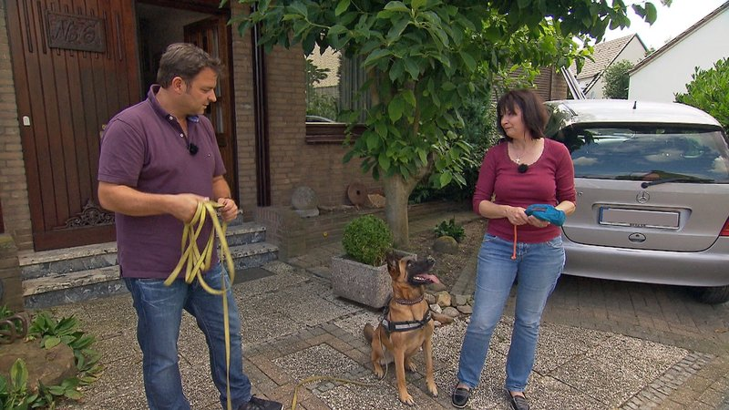 """Martin Rütter merkt sofort, dass """"Maggy"""" ihrer Besitzerin Regina Heise im wahrsten Sinne des Wortes nicht über den Weg traut, und setzt von Beginn an auf vertrauensbildende Maßnahmen für Mensch und Hund. – Bild: TVNOW / Mina TV"""