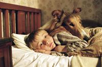 Lassie kehrt zurück – Bild: 3sat