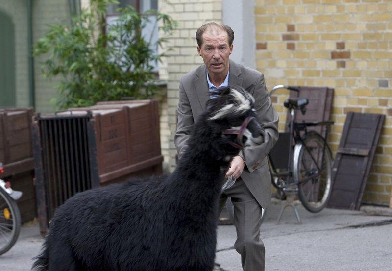 Dr. Fährmann (Michael Lesch) ist entsetzt. Alpaka Harry will flüchten. – Bild: ARD/BR/Olaf Raymond Benold