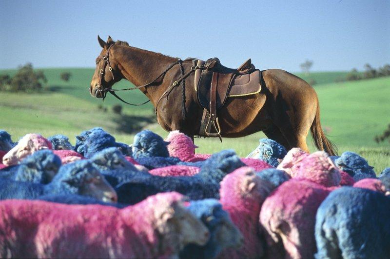 McLeods horse. – Bild: Servus TV