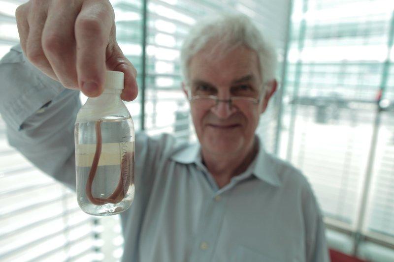 """Professor Graham Rook vom University College London hat die """"Alter Freund""""-These entwickelt, um den jüngsten Ansteig von Allergien zu erklären. Er hält einen parasitären Wurm, der unseren Vorfahren dabei half, Allergien abwenden. – Bild: BBC 2014/BR/Oliver Schofield"""