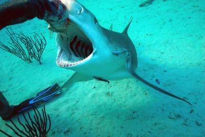 Naked Survival: 14 Tage auf der Hai-Insel (Staffel 31, Folge 23) – Bild: Discovery Communications