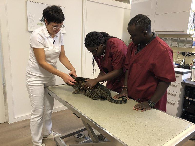 Chefin Angelika untersucht mit ihren Tauscharbeitern aus Sambia eine Katze. – Bild: BR/Constantin Entertainment GmbH