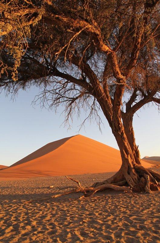 Düne 45, davor ein einsamer Kameldornbaum. – Bild: BR/SWR/Rüdiger Lorenz