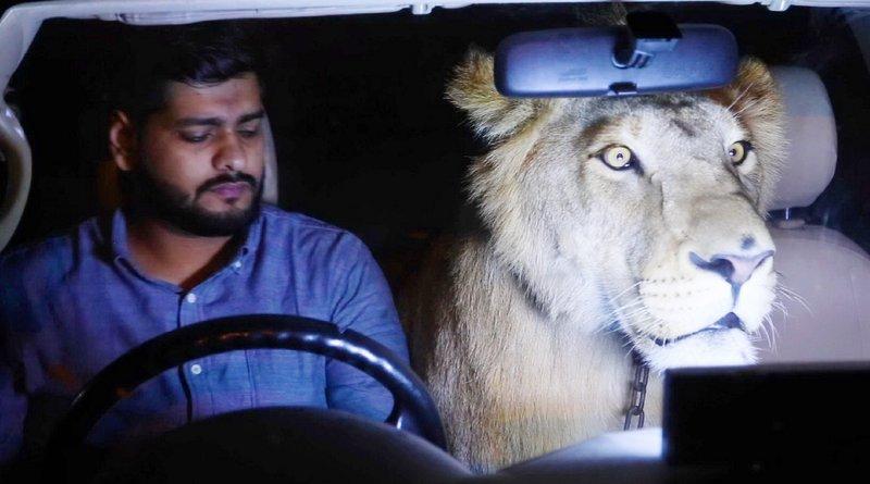 Ein Taxifahrer in Pakistan zieht einen Löwen groß. Jetzt will er sich nicht mehr von dem Tier trennen und nimmt ihn oft mal mit bei der Arbeit. Ob sich das positiv auf sein Geschäft auswirkt? Eine artgerechte Haltung ist es jedenfalls nicht. – Bild: TVNOW
