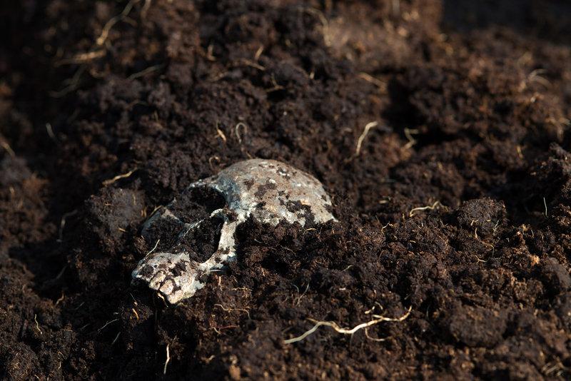 Juttas Sohn Jonas besucht Paul m Moor. Plötzlich entdecken die beiden einen Schädel. Haben sie gerade die Leiche der vor 16 Jahren verschwundenen Fee Lohse gefunden? – Bild: ZDF und Marion von der Mehden