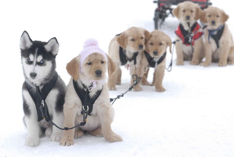 Snow Buddies - Abenteuer in Alaska – Bild: DISNEY. ALL RIGHTS RESERVED