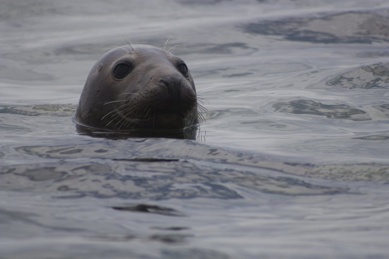 Seal peeking out. – Bild: Discovery Channel