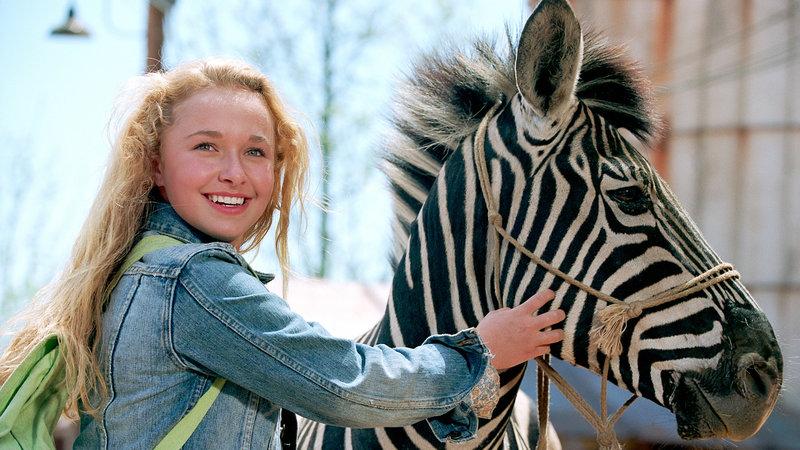 Im Rennstall ist das Zebra los! – Bild: RTL II