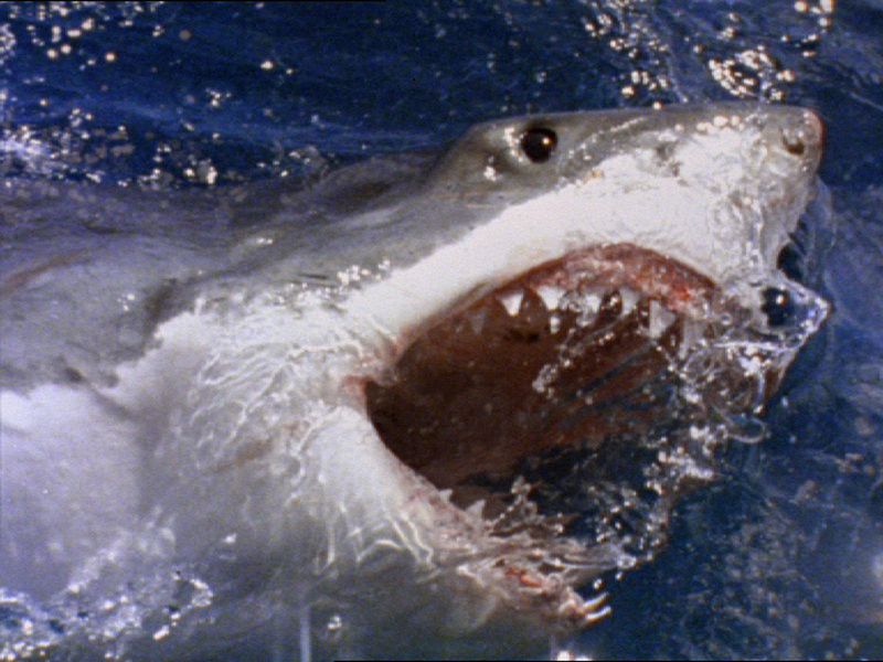Eine Serie brutaler Haiangriffe vor der mexikanischen Küste zerstört die Strandidylle. Doch es kommt noch schlimmer... – Bild: BDP