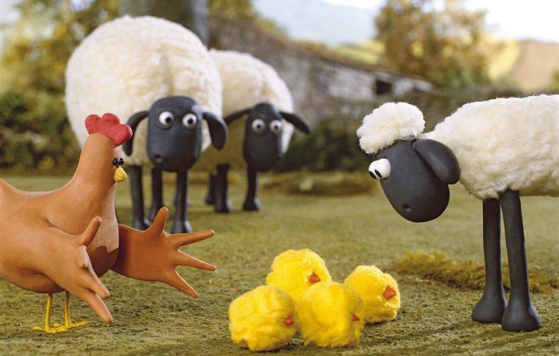Schon Der Schaf