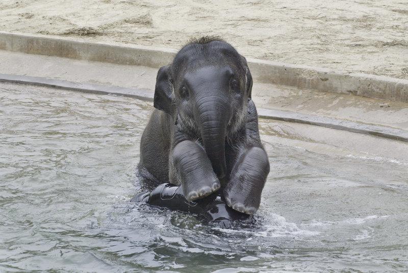 Elefanten (Staffel 2, Folge 3) – Bild: Animal Planet / c Smithsonian Institution
