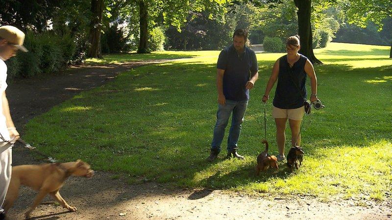 Hundeprofi Martin Rütter und Maria Esser mit ihren Dackeln. – Bild: MG RTL D / Mina TV