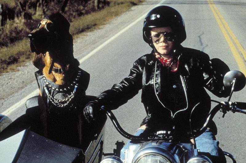 Auf der Flucht vor diversen bösen Gestalten: Johnny (Johnny White) und Clyde ... – Bild: TM & © 2003 by Paramount Pictures Corporation. All Rights Reserved. Lizenzbild frei