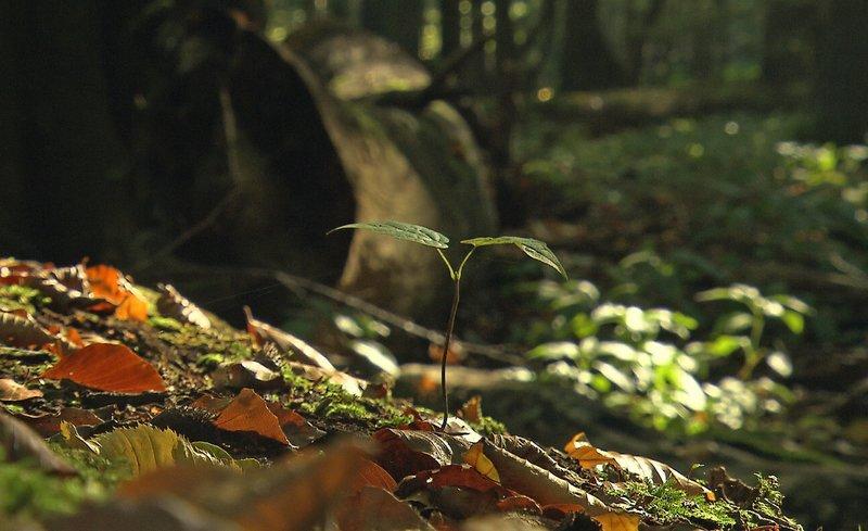 Buchenspro?ssling auf Totholz im Hainich. – Bild: BR/SWR