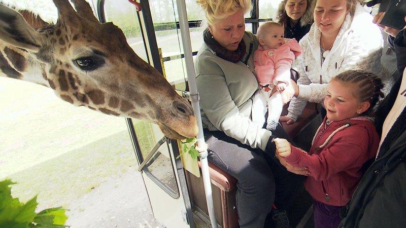 Während einer Tour durch den Safaripark kommt Familie Wollny den Tieren ganz nah. Besonders Nesthäkchen Celina hat keinerlei BerührungsängsteWährend einer Tour durch den Safaripark kommt Familie Wollny den Tieren ganz nah. Besonders Nesthäkchen Celina hat keinerlei BerĂĽhrungsängste – Bild: RTL Zwei