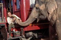 Wasser für die Elefanten – Bild: ORF