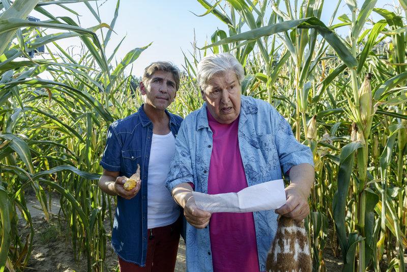 Fritz Fuchs (Guido Hammesfahr, l.) und Nachbar Paschulke (Helmut Krauss, r.) haben sich hoffnungslos im Maisfeld verirrt. – Bild: ZDF und Antje Dittmann
