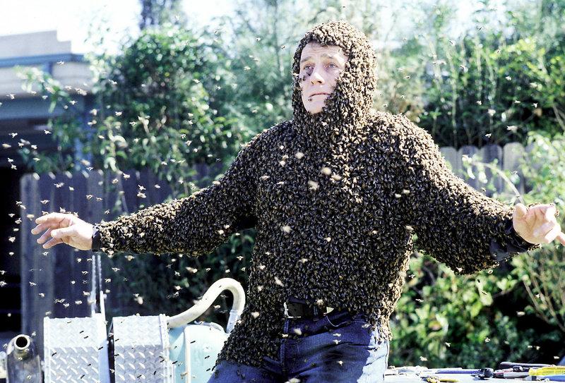 """Hal (Bryan Cranston) konnte seiner eigenen """"Bienen-Kanone"""" nicht mehr rechtzeitig ausweichen. – Bild: ORF eins"""