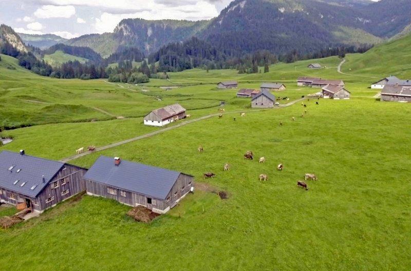 Im Sommer sind auf dem Vorsäß Schönenbach 200 Kühe auf der Weide - nirgendwo gibt es Zäune, alle Tiere können sich hier frei bewegen. – Bild: arte