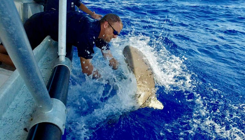 Mike tags a Silver Tip Reef shark. – Bild: Discovery Channel / Discovery Communications