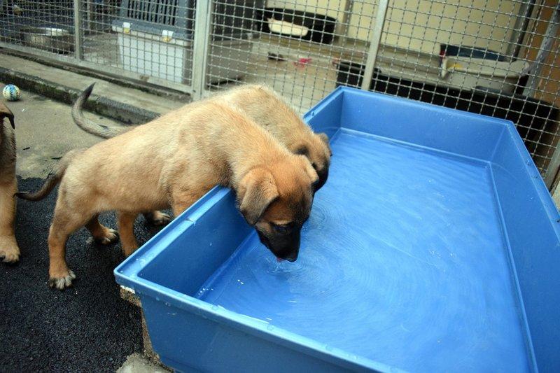 Im Tierheim Siegen ist eine trächtige Hündin abgegeben worden, die inzwischen 12 Welpen zur Welt gebracht hat. Es ist eine große Herausforderung und jede Menge Arbeit für die Tierheimmitarbeiter, die Kleinen alle gesund durchzubringen. – Bild: MG RTL D / Mina TV GmbH
