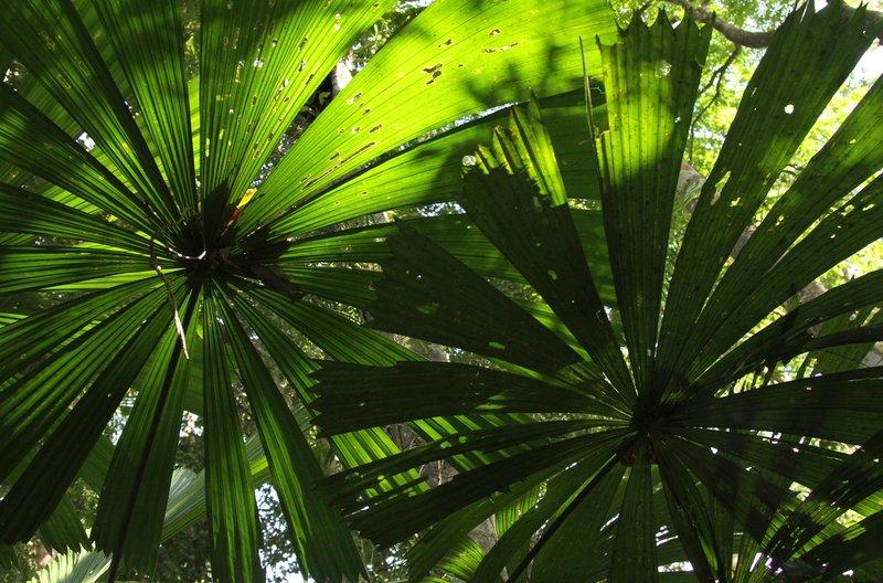 Im tropischen Regenwald im Nordosten Australiens herrscht eine wunderschöne Flora und Fauna. – Bild: NDR / © NDR Naturfilm doclights/Grospitz & Westphalen