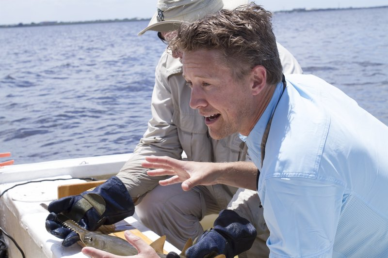 Gregg Poulakis and Luke Tipple is with a juvenile sawfish. – Bild: Discovery Channel / Discovery Communications