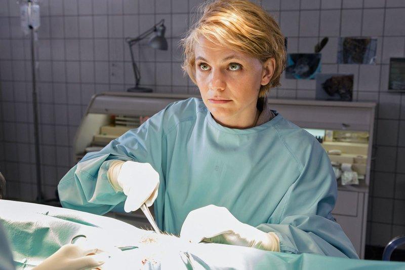 Tierarzthelferin Anett (Anna Bertheau) assistiert bei der Entfernung eines Schlüsselbundes aus dem Hals einer Straußenhenne. – Bild: ARD/Steffen Junghans