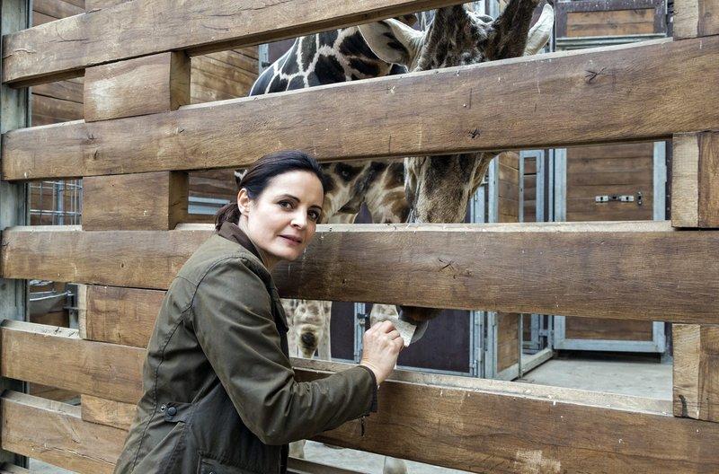 Tierärztin Dr. Mertens (Elisabeth Lanz) braucht eine Blutprobe des Giraffenbullen, doch das ist gar nicht so einfach. – Bild: ARD/Steffen Junghans