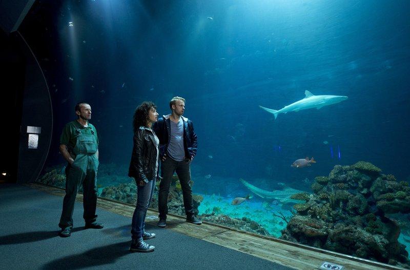 Einbruch im Tropen-Aquarium: Tierpfleger Ronny (Andreas Kalauch, l.) begleitet Harry (Maria Ketikidou, M.) und Mads (Mads Hjulmand, r.) bei ihrem Kontrollgang, vorbei am Aquarium mit den Haien. – Bild: ARD