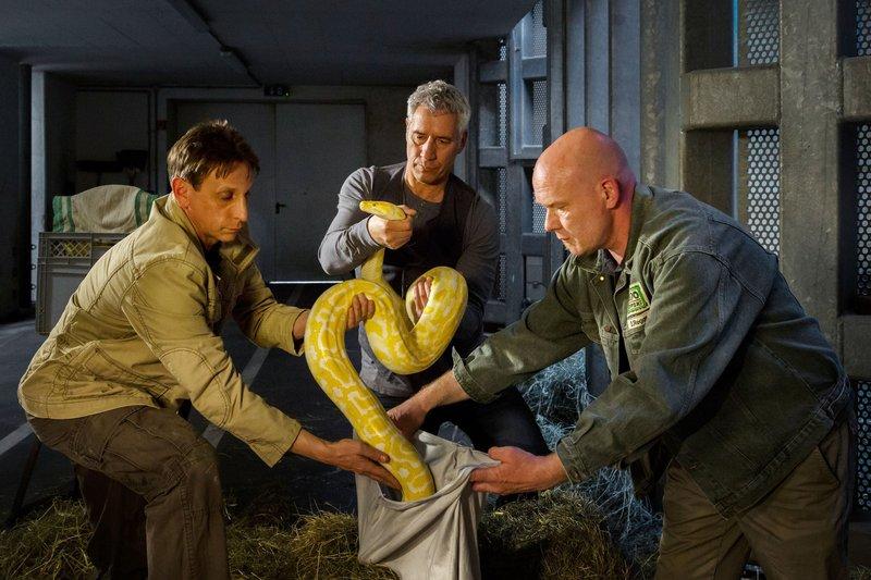 Zoodirektor Dr. Blum (Ralph Herforth, M.), Cheftierpfleger Conny Weidner (Thorsten Wolf, l.) und ein Mitarbeiter (Komparse, r.) des Zoos haben den vermissten Python noch rechtzeitig gefunden. – Bild: ARD/Steffen Junghans