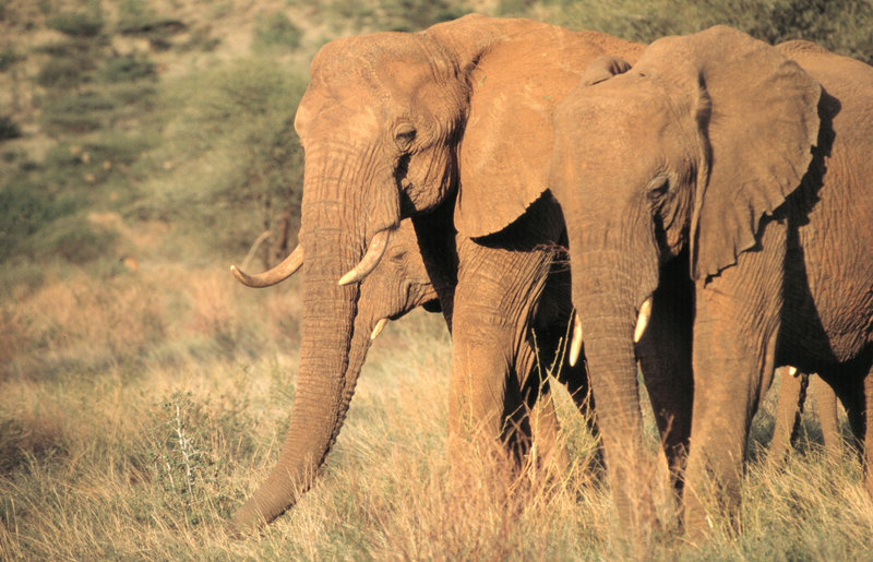 Afrikas Glorreiche Sieben – Bild: ANIMAL PLANET / KARL AMMANN / DHD