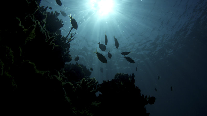 Underwater shot of sun rays and fish. – Bild: Discovery Channel / Discovery Communications