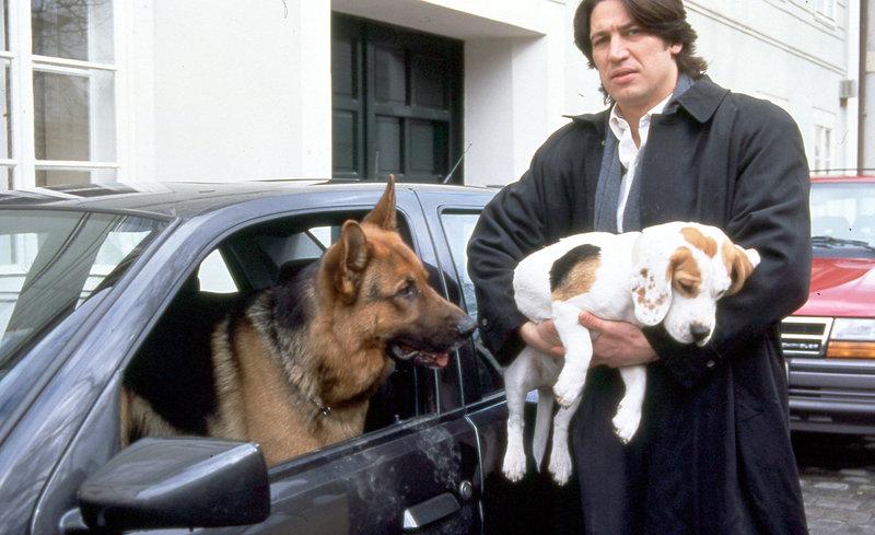 Rex kann seinen Blick nicht von der Beagle-Dame wenden, die Kommissar Richie Moser (Tobias Moretti) mitnimmt. – Bild: ORF2