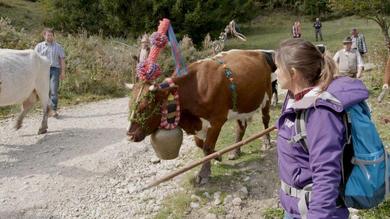 Beim Almabtrieb werden die KĂĽhe festlich geschmĂĽckt. Damit feiern die Wirte einen erfolgreichen Almsommer, in dem weder den Tieren noch der Familie etwas zugestoüen ist.– Bild: BR/Bild Medienproduktion GmbH & Co. KG