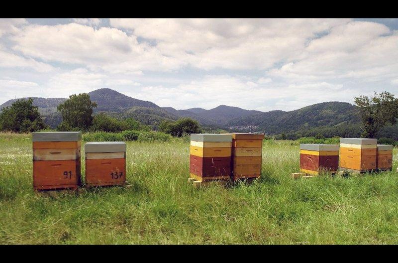 Norbert Poeplau hat sich für eine wesensgerechte und ökologische Bienenhaltung entschieden. Die Lehr- und Versuchsimkerei Fischer wurde mit dem Förderpreis Ökologischer Landbau ausgezeichnet. – Bild: arte