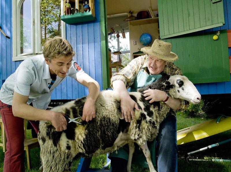 Schafschur auf Fritz Fuchs (Guido Hammesfahr) Manier, Herr Paschulke (Helmut Krauss) hält das Schaf fest.– Bild: KiKA