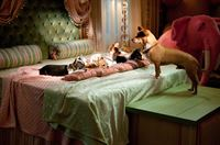 Beverly Hills Chihuahua 2 – Bild: Super RTL