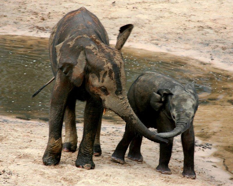 Dzanga Bai ist für junge Waldelefanten einer der besten Spielplätze überhaupt. – Bild: Geo Television / Doclights