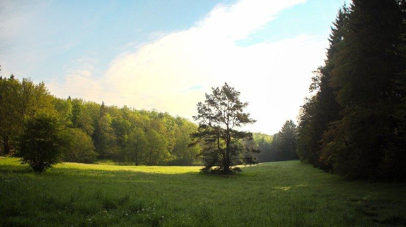 Der Pfälzerwald ist das größte zusammenhängende Waldgebiet Deutschlands - ein Paradies für Naturschützer, Wanderer und Urlauber. – Bild: TVNOW / AZ Media