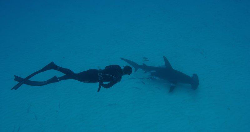 Michael Phelps swims towards a Hammerhead shark. – Bild: DCI