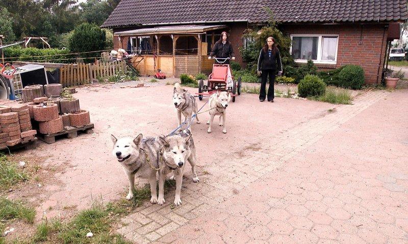 Rudelführer Kai (41) macht zwischen seinen Kindern und seinen 40 Huskys keine Unterschiede: Er erzieht streng und konsequent. – Bild: VOX