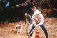 Lassie und ihr Freund Neeka – Bild: kabel eins Classics