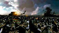 Die Krähen – Bild: Sat.1 Gold